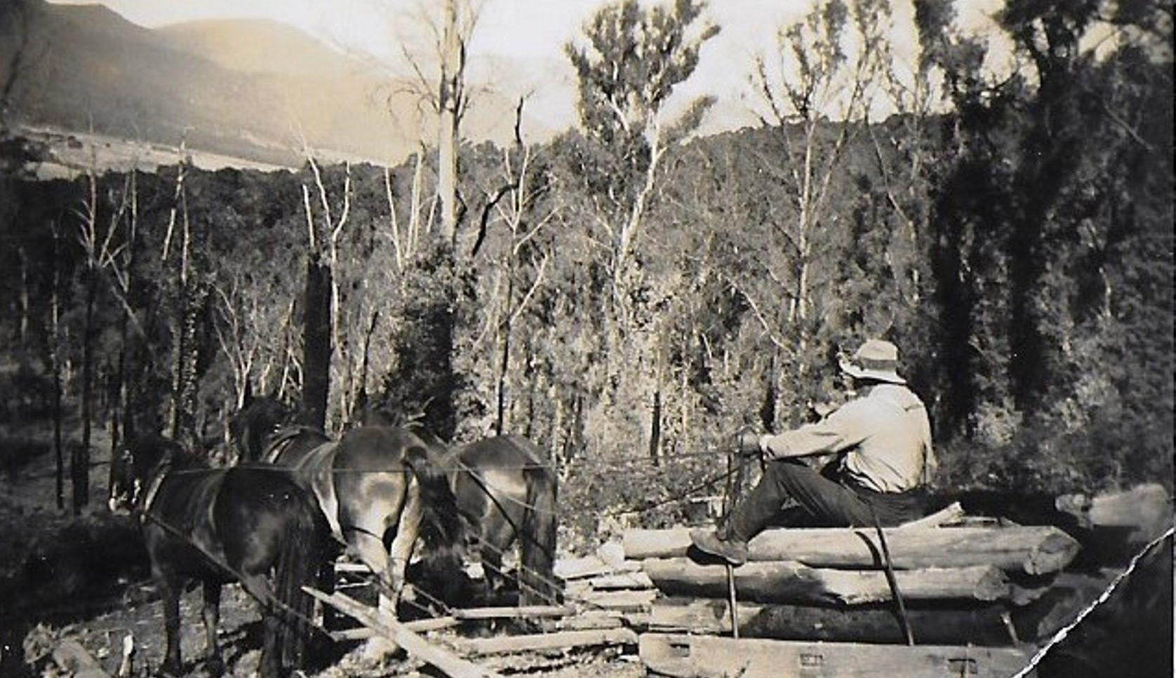 John-Baker-hauling-logs