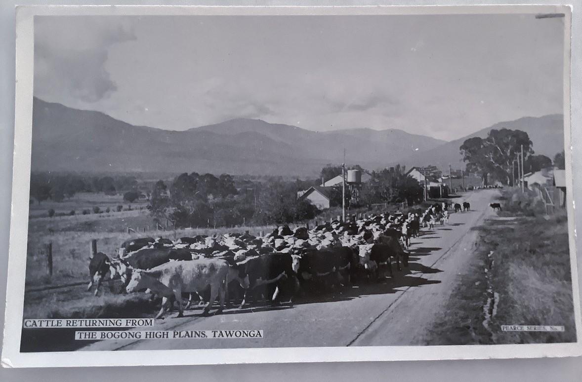tawonga-postcard-series-001