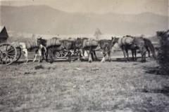 damm-packhorses-002