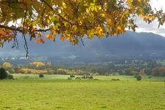 tawonga-autumn